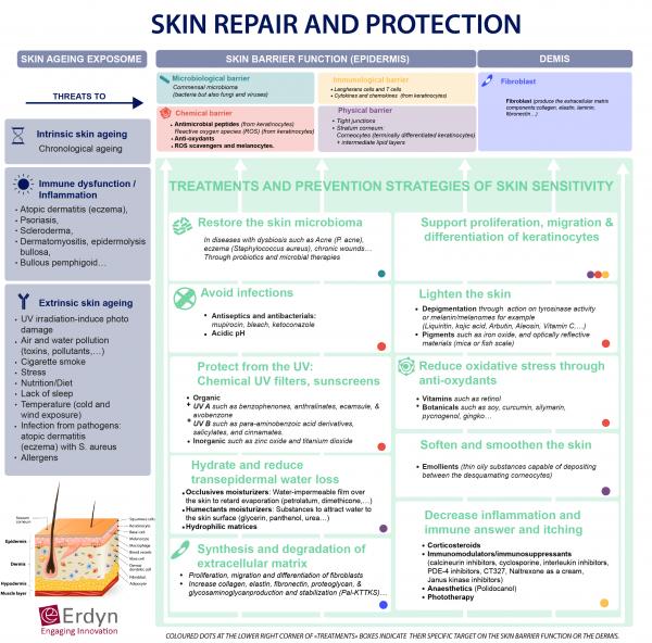 Skin repair and protection Erdyn